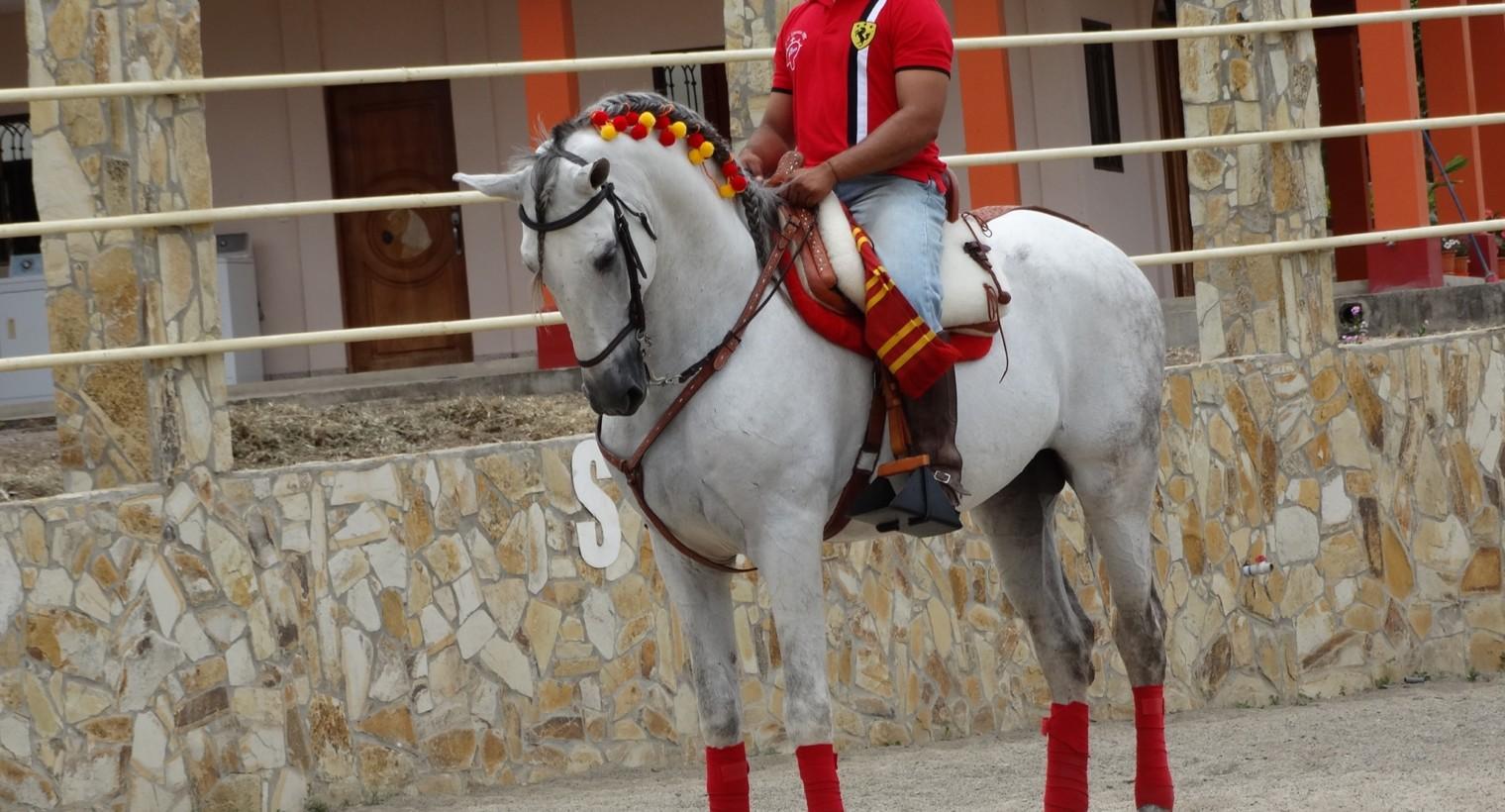 Clases de Equitación.